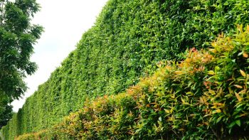 Feature tree ideas and inspiration for your garden